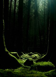 Crowned Corvus:  Moss & Trees by dog_by_day on Flickr.