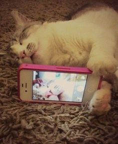 Bae Caught Me Sleepin Cat | 31 Cats You Won't Believe Actually Exist