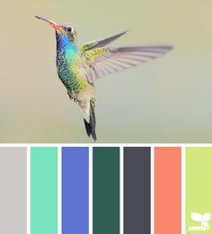 #hummingbird #hues #colors #color #palette
