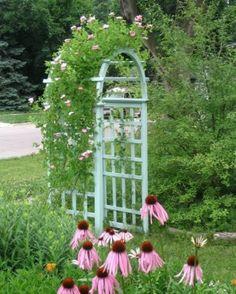 Climbing roses on a garden arch