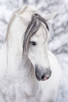white horse....mane over eyes...