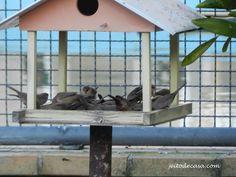 Jeito de Casa, coloque um tratador no seu jardim e curta a presença dos passarinhos!