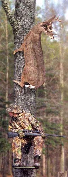 El cazador se cree listo, la presa lo es más... #Humor