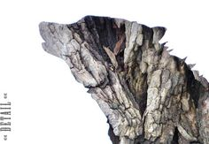 Wolf in Bark  Woodland animal photography  Woodland by wildpulp, $60.00