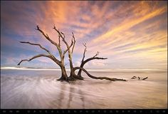 The Calm - Folly Beach at Sunset by Dave Allen