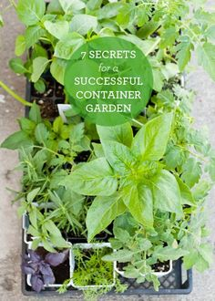 Secrets to Container Gardening.