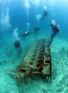 BARBADOS! Dive into the magic underwater world in Barbados! #Barbados #Diving