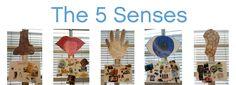 Kindergarten and The FiveSenses