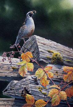 Rail Fence Quail - Susan Bourdet