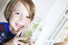 mini greenhouse for kids