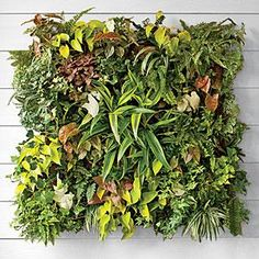Plant Your Walls | Transform any bare vertical spot into a lush living wall with this simple and smart planting system. | SouthernLiving.com jardin, vertical planted wall ideas, wall decor plants, green, beauti garden, grow, gardening, garden idea, wall gardens