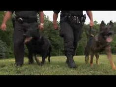 #History On The #GermanShepherd – #Police And #FamilyDog    Not only the German Shepherd is a #Cops best friend  but they are also loyal and protective for your #Family.    What do you think about the #GermanShepherdDog ?  Can you see in this video any other #Talents?  Please #Pin and #Share with friends and see what they say.