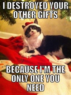 Overly attached cat.