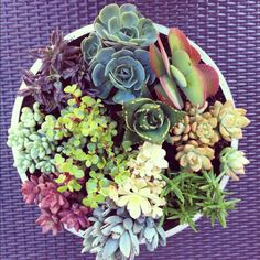 Succulent Garden :)