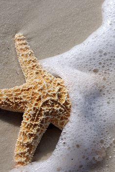 Starfish  ♥ ♥