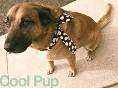 Chill Out Cooling Neck Wraps for Adults, Kids  Dogs | Sew4Home