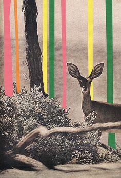 collage by jonathan sandridge