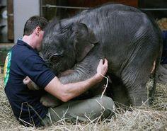 Baby elephant loves. -dawwwww!!