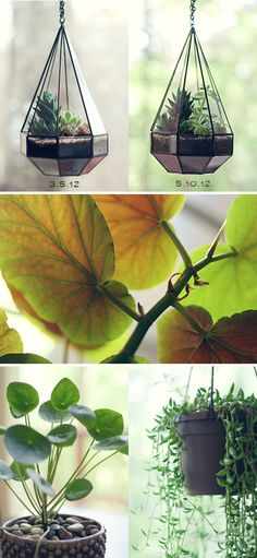 Tips for keeping your Houseplants Alive
