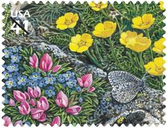 Melissa Arctic butterfly and colorful alpine flowers
