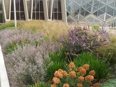 Roy Diblik, co-owner of Northwind Perennial Farm in Burlington, WI designed and installed the gardens at the entrance to Mitchell Park Connservatory (The Domes) in Milwaukee, WI