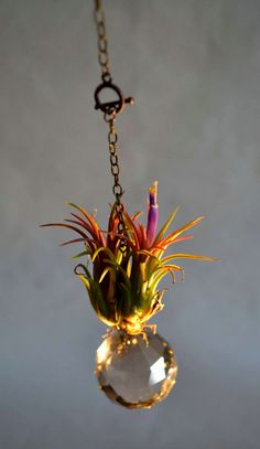 Handcrafted, hanging tillandsia (air plant) -
