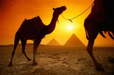 would love to see the pyramids