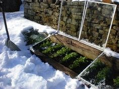 Cold frames in the yard.