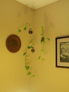 Lightbulbs for mini planters