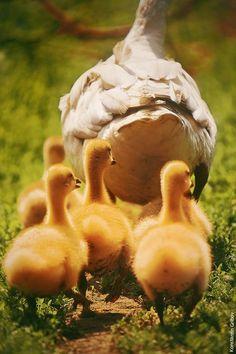 Following Mama!! Adorable