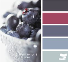 blueberry tones design seed, color palett, blueberri tone, colors, blueberry paint, seeds color schemes, blueberries, bedroom, paint themes