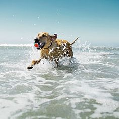 Our Favorite Dog-Friendly Beaches | For Long Walks | CoastalLiving.com