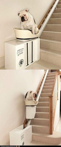 dog elevator?