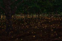 Fireflies by Antonio De Stefano