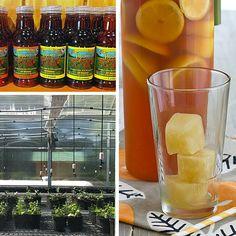 Honey Lemon Ginger ice cubes for tea!