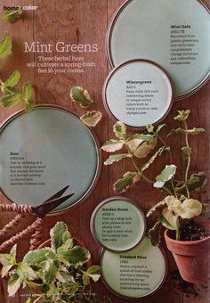mints, decor, bedroom idea, living rooms, mint green, living room colors, famili, minti green, green paint colors