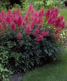 Take a look at this Montgomery Astilbe - Set of Three by Cottage Farms Direct on #zulily today!
