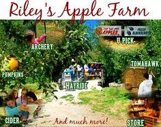 Apple picking in Oak Glen.