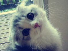 sad kitty is sad... I've had one of these