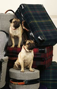Ralph Lauren Tartan Luggage bag, dog, pug