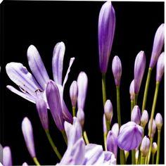 Gallery Direct Fine Art Prints: Floret Purple V by Sia Aryai