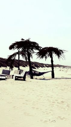 #Tropical #Ameland #Beach #Freedom