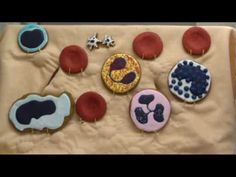 Blood Cell Bakery--Introduction