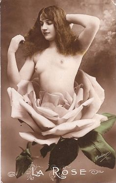 The  Rose  1910s vintage nude beauty postcard