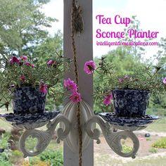 Tea Cup Sconce Planter Repurpose Project