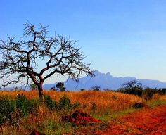 Kidepo National Park, located in the very north of Uganda on the border with South Sudan