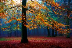 fall tree primary colors, color pallets, inspir, forest, beauti, fall weddings, nature photography, fall trees, autumn look