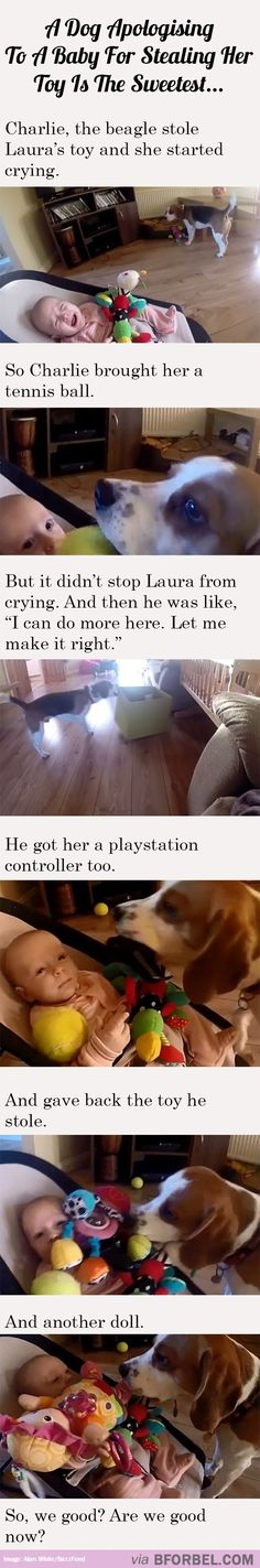 A Dog Apologizing To A Baby For Stealing Her Toy Is The Sweetest Thing Ever…