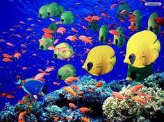 Ocean Life Theme for Preschool