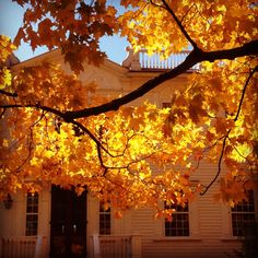 Autumn at Beekman 1802